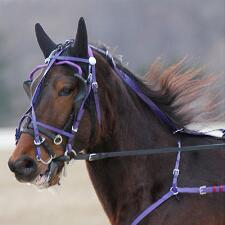 Feather-Weight Kant See Back Bridle Beta - TB