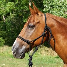 Professionals Choice Rope Halter with Lead
