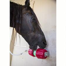 Jolly Jumbo Lick and Stall Snack Refills  - TB