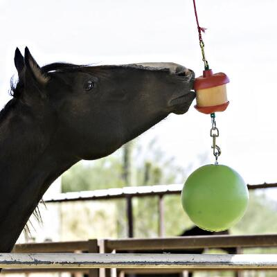 Horsemens Pride Jolly Stall Snack Holder with Apple Scented Jolly Ball